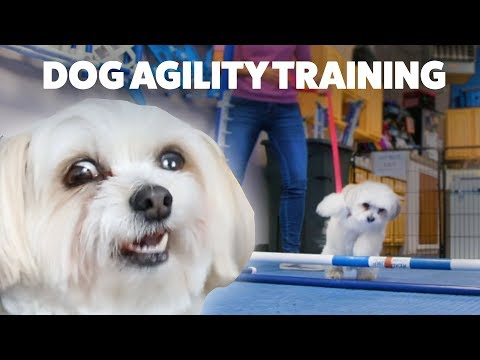 A Rescue Dog Tries Agility Training For The First Time • Doggie Destinations