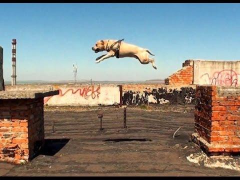Extreme Dog Training