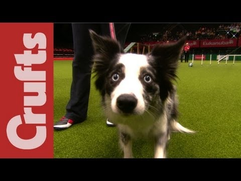 Funniest Moments of Crufts 2012