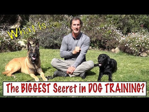 The Biggest Secret in Dog Training – What the Best Dog Trainers Know – Understand Your Dog