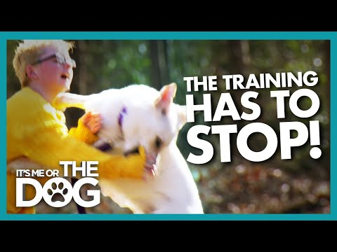 Dog Training Halted After Play Turns into an Attack | It's Me or the Dog
