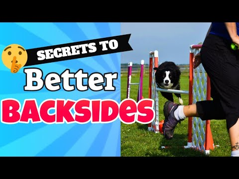 Dog Agility Backside Jump Training
