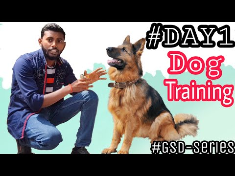 Dog Training – Day 1 || How to Start Basic Training from the 1st Day 4K  HINDI #GSD