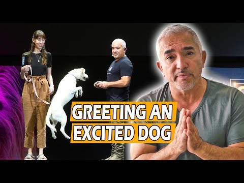 How To Calm An Excited Dog (First Meeting) – Live Dog Demo!