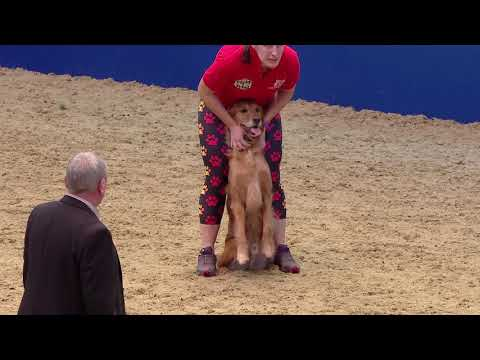 2019 OLIHS Kennel Club ABC Wednesday AFTERNOON