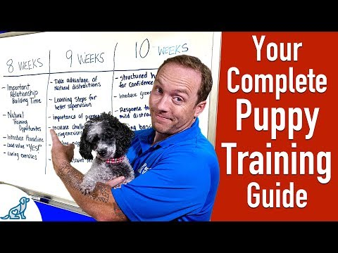 Puppy Training Schedule By Age – Professional Dog Training Tips
