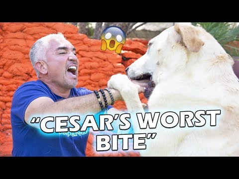 What Happened to Holly? | Reacting To Cesar's Worst Bite