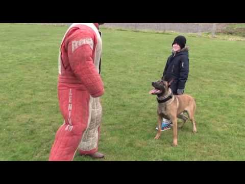 personal / family protection dog training