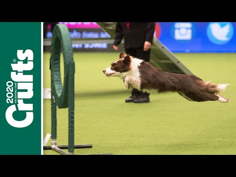 Can your dog do this? Dog Agility returns to Crufts 2020!