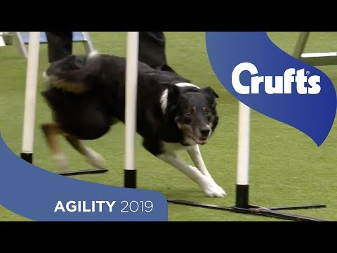 Agility – International Invitation – Large (Agility) – Finals | ​Crufts 2019