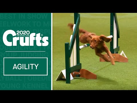 Agility – Championship Final | Crufts 2020