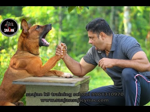 Dogs Training at Its Best / Saajan K9 Dog Training School at Pala