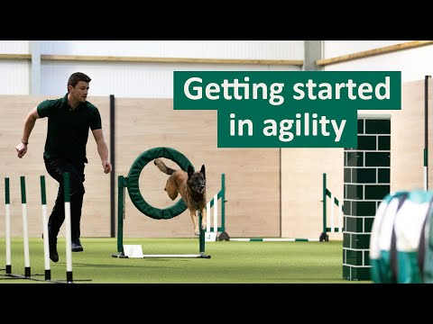 How to get started in Dog Agility | Dog Tips and Tricks