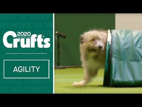 Heartwarming Rescue Dog Agility | ​Crufts 2020