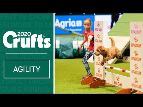 YKC Agility Dog of the Year | ​Crufts 2020