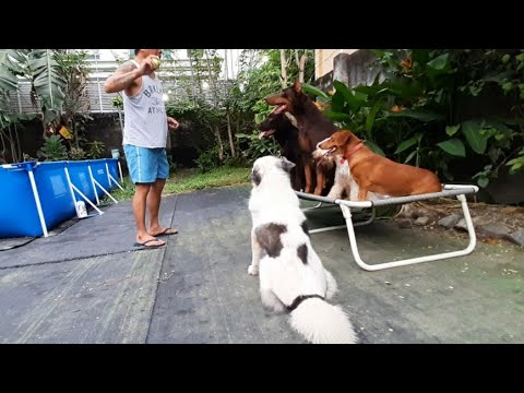 Physical and mental exercises for dogs and free dog training tips from a professional dog trainer