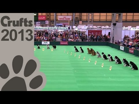 Obedience Dog Championships – Day 3 – Stay Tests – Crufts 2013