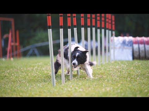 Top of the World – Syrius Agility Sport