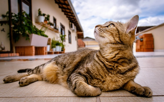 Cat Tips And Tricks For Animal Lovers