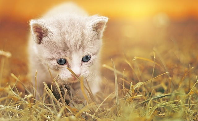 Clawtastic Tips For Better Cat Care And Love